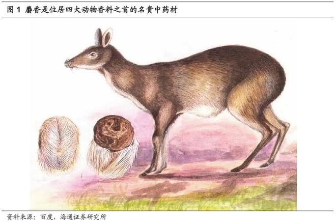 麝是亚洲特产动物,世界上仅分布于中国,尼泊尔,不丹,巴基斯坦,孟加拉