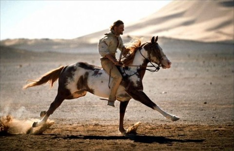 壁纸 动物 马 骑马 480_311