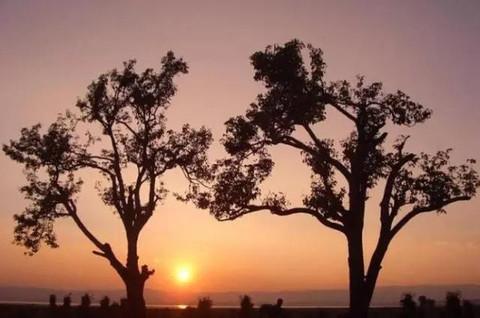 风景 树 天空