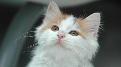 可爱小猫蹲在篮子素描