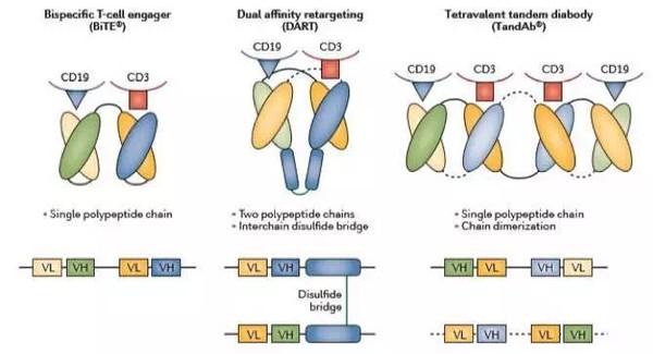 结构 blinatumomab的临床数据