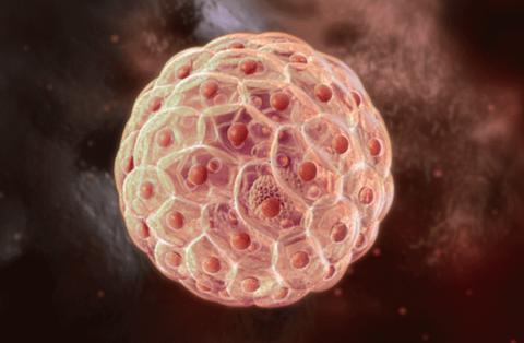 干细胞修复疗法动物实验获成功