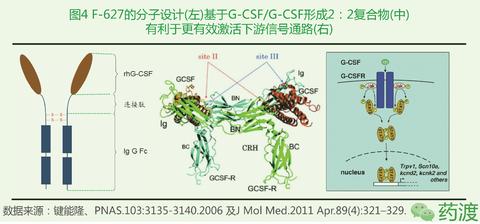 f-627的设计基于g-csf与g-csfr形成2:2的复合物,通过设计使得表达纯化