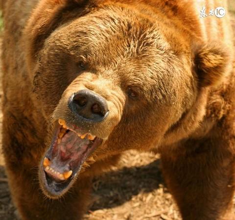 真熊的可爱图片