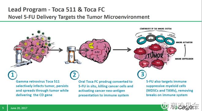 5氟尿嘧啶治疗肿瘤的原理_雷替曲塞 5 氟尿嘧啶腹腔内给药途径治疗艾式腹水瘤小鼠的实验研究