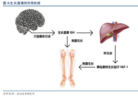 生长素发展历程 - 王朝雄 - 王朝雄