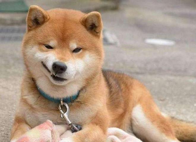 PGOne、侯耀华们的本命年(还不转发给10个属狗的朋友吗!)