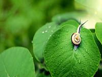 一只在股市里专注20年的蜗牛